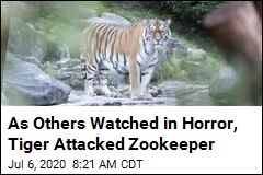 As Tiger Attacked Zookeeper, 'All Help Came Too Late'