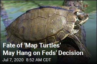 Fate of Mississippi Turtles May Hang on Feds' Decision