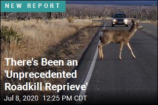 There's Been an 'Unprecedented Roadkill Reprieve'