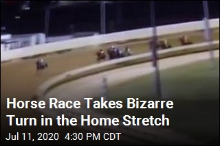 Horse Race Takes Bizarre Turn in the Home Stretch