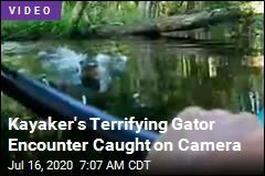 Peaceful Kayaking Trip Upended by Charging Gator