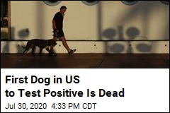 First Dog in US to Test Positive Is Dead