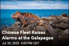 Chinese Fleet Raises Alarms at the Galapagos
