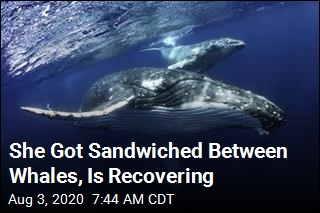She Got Sandwiched Between Whales, Is Recovering
