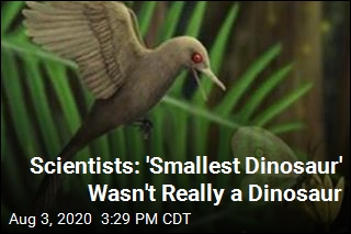 Scientists Backtrack on 'Smallest Dinosaur' Claim