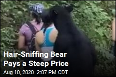 Hair-Sniffing Bear Pays a Steep Price
