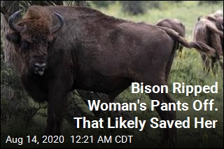 Bison Ripped Woman's Pants Off. That Likely Saved Her