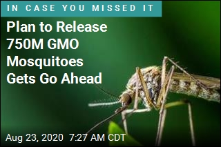 Plan to Release 750M GMO Mosquitoes Gets Go Ahead