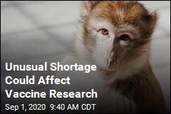 US Experts: We Need More Research Monkeys