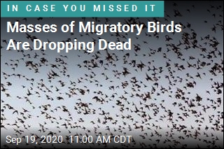 'Maybe Millions' of Birds Dying of Unknown Causes