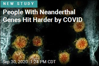 Neanderthal Genes Are COVID Risk Factor