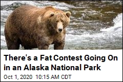 There's a Fat Contest Going On in an Alaska National Park