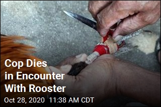 Cop Dies in Encounter With Rooster