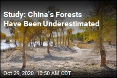 Study: China's Forests Suck Up More Carbon Than Thought