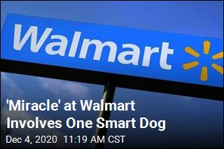 Dog Missing 3 Weeks Finds Owner at Walmart
