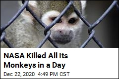 NASA Killed All Its Monkeys in a Day