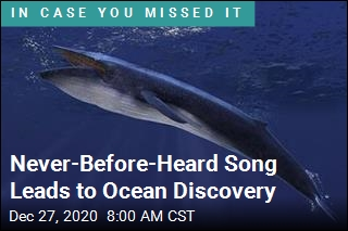 Unique Song Reveals New Population of Blue Whales