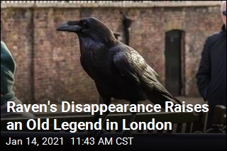 London Is Worried About a Missing Raven