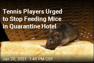 Quarantined Tennis Players Told to Stop Feeding Mice