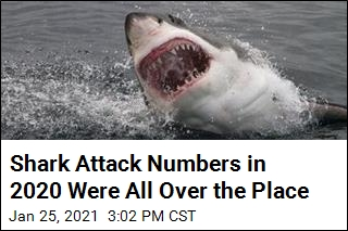 Shark Attack Numbers in 2020 Were All Over the Place
