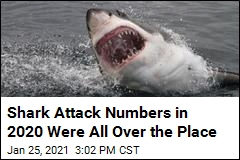 Shark Attack News Of Recent Shark Attacks Page 1 Newser