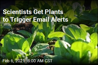 Plants Can Detect Nasty Things in Soil, 'Send' an Email