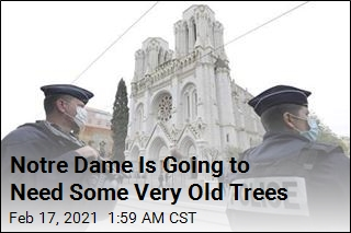 France Needs 1.5K Ancient Oaks for Notre Dame Rebuild
