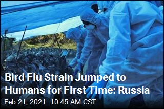 Bird Flu Jumped to Humans for First Time: Russia