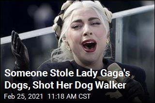 Lady Gaga Offers Huge Reward After Dogs Taken, Walker Shot