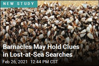 Barnacles May Hold Clues in Lost-at-Sea Searches