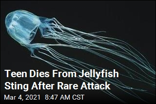 Teen Dies From Jellyfish Sting After Rare Attack