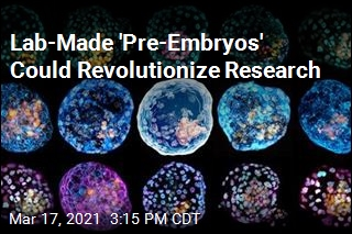 Lab-Made 'Pre-Embryos' Could Revolutionize Research