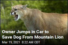 Owner's Quick Move Saves Dog From Mountain Lion