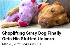 Shoplifting Stray Dog Finally Gets His Stuffed Unicorn