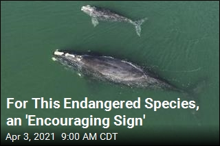 For This Endangered Species, an 'Encouraging Sign'