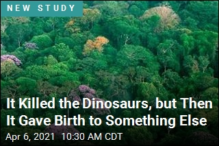 It Killed the Dinosaurs, but Then It Gave Birth to Something Else