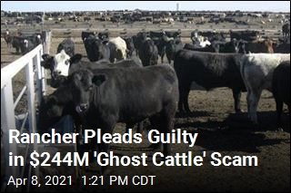 Rancher Scammed Tyson With 266K Fake Cows