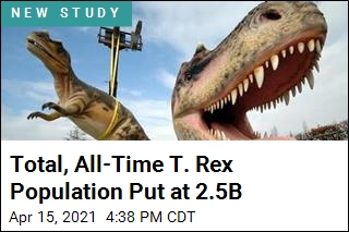 It Wouldn't Have Been Easy to Bump Into a T. Rex