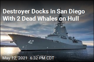 Destroyer Docks in San Diego With 2 Dead Whales on Hull