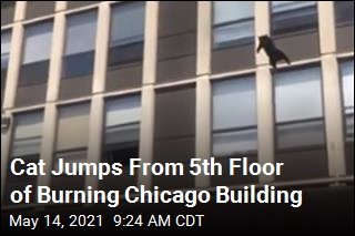 Cat Jumps From 5th Floor of Burning Chicago Building