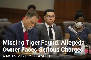 Missing Tiger Found, Alleged Owner Faces Serious Charges