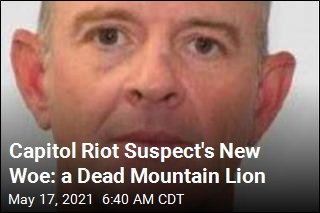Capitol Riot Suspect Now in Hot Water Over Dead Mountain Lion