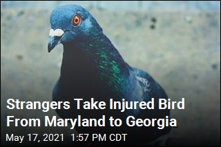Strangers Take Injured Bird From Maryland to Georgia