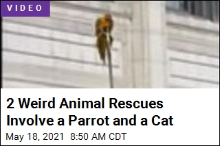 Weird Rescues: Parrot on a Ledge, Cat in a Maserati