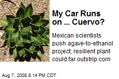 My Car Runs on ... Cuervo?