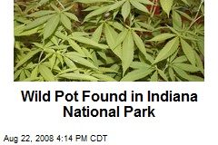 Wild Pot Found in Indiana National Park