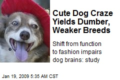 Cute Dog Craze Yields Dumber, Weaker Breeds