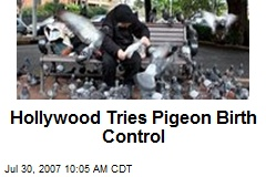 Hollywood Tries Pigeon Birth Control