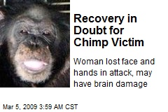 Recovery in Doubt for Chimp Victim