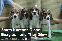 South Koreans Clone Beagles—and They Glow